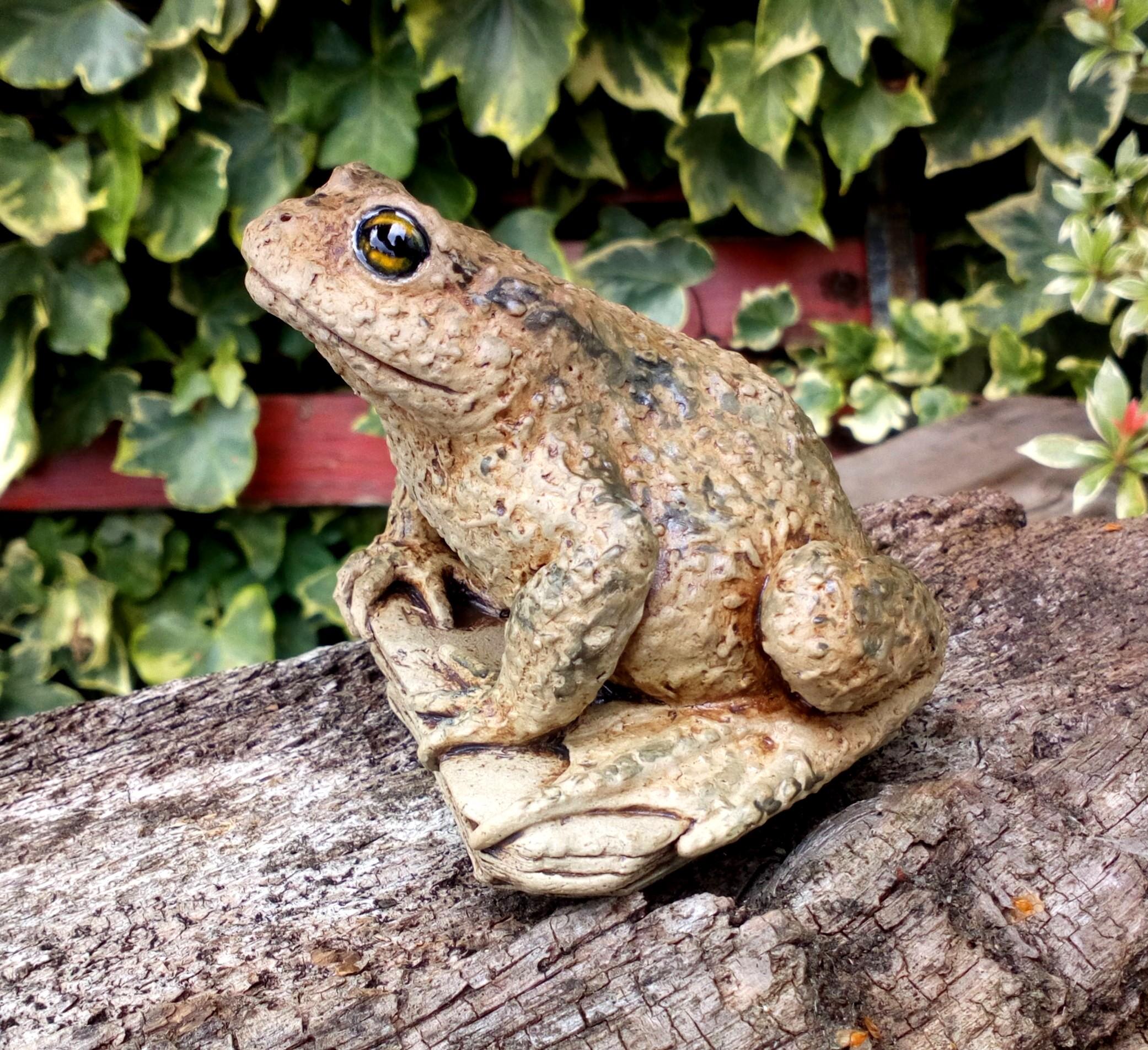 Toad by Lynn Hazel